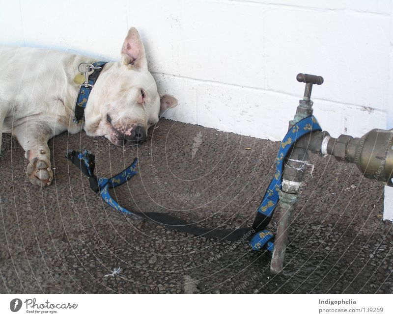Prinzipsache Freiheit Hund Seil Säugetier Australien resignieren Tier Dogge ungefährlich