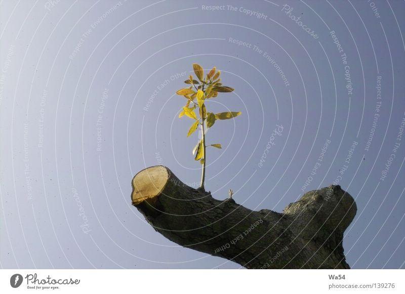 Hoffnung Natur alt Himmel Baum blau Pflanze Blatt Einsamkeit Leben Frühling Beginn frisch neu Wachstum Zukunft
