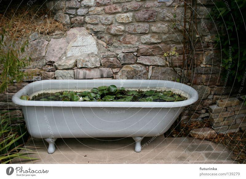 Wasserlilien in der Badewanne Wasser weiß Blume Pflanze Stein Trauer Wachstum Möbel Verzweiflung Badewanne Lilien