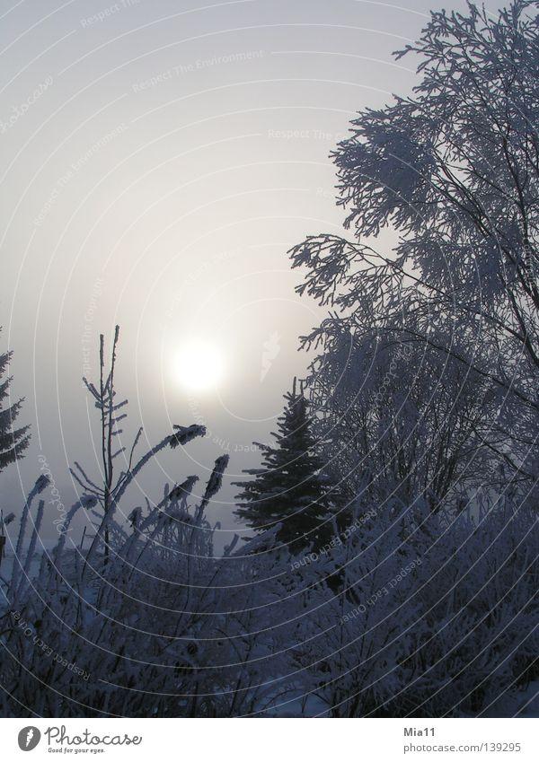 Wintermorgen Baum Sonne Pflanze Winter Wald kalt Schnee Eis Nebel Frost Raureif