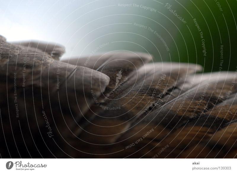 Falkenflug schön Himmel Tier Luft Vogel Angst Lebensmittel fliegen Feder Flügel Jagd Kontrolle Wachsamkeit Fressen Panik