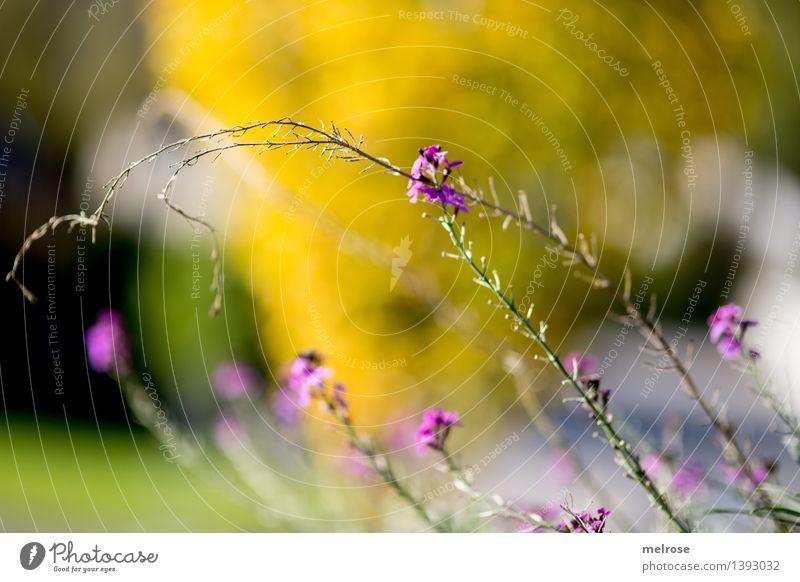 herbstlich Natur Pflanze grün schön Erholung Blume Blatt gelb Blüte Herbst natürlich Stil Garten rosa glänzend Design