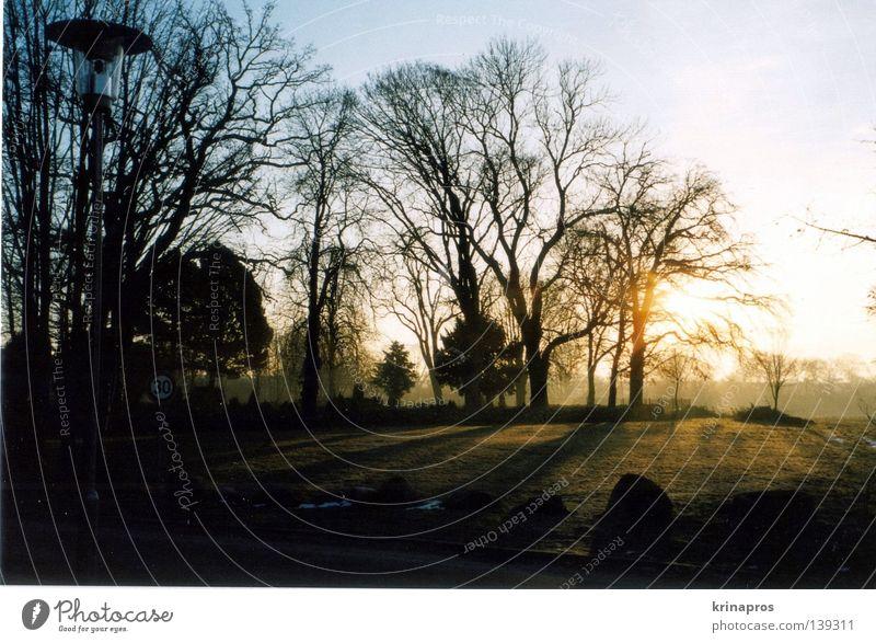 ...als wäre nichts passiert schön Sonnenlicht Physik Trauer Friedhof Einsamkeit Morgen dunkel Sonnenstrahlen Licht Grab Baum Außenaufnahme Landschaft Gegenlicht