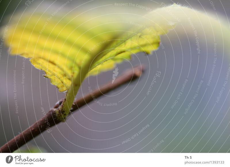 Blatt Natur Pflanze Herbst Bewegung verblüht ästhetisch authentisch einfach elegant natürlich blau braun gelb grau Gelassenheit geduldig ruhig einzigartig