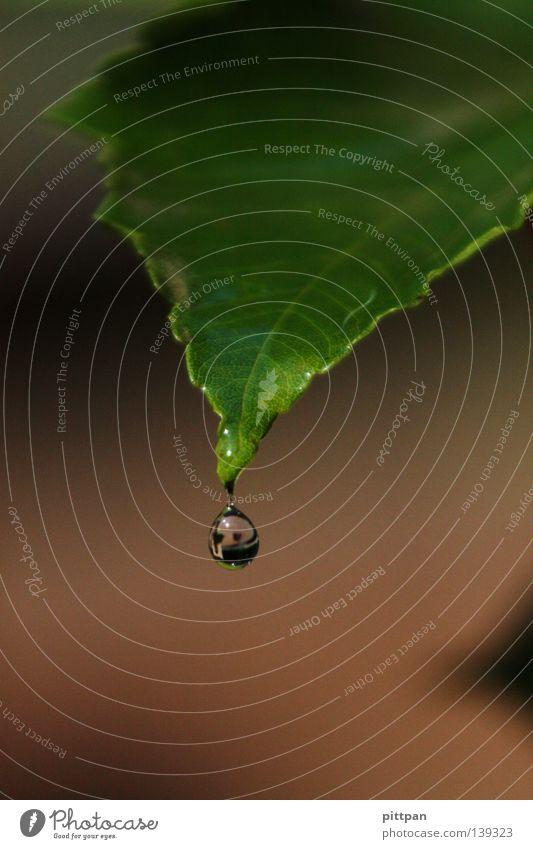 watery I Natur Wasser grün Pflanze Blatt Herbst Regen Umwelt nass Wassertropfen Tropfen fallen feucht Tau Wildpflanze