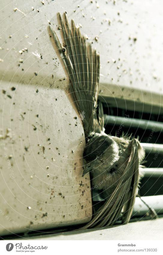 Is mir schlecht! Tod Traurigkeit Vogel Trauer Flügel Unfall Schnabel Desaster Krallen Spatz Opfer Missgeschick fatal tragisch Gitterrost einklemmen
