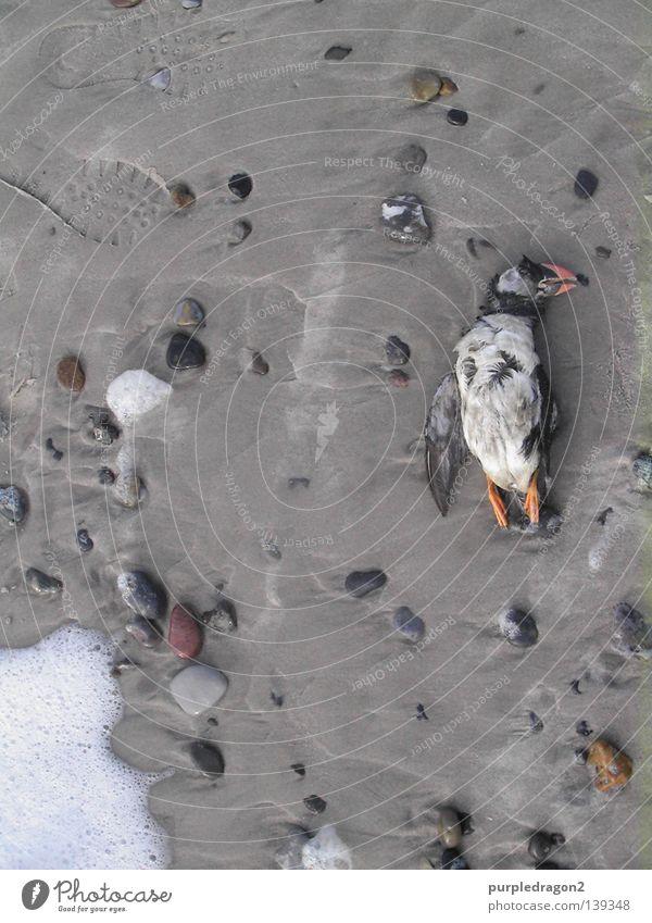 Nach der Trauerrede Papageitaucher Strand Vogel Island Auferstehung Rede Schaum Gischt Meer Dänemark bird Stein stone death