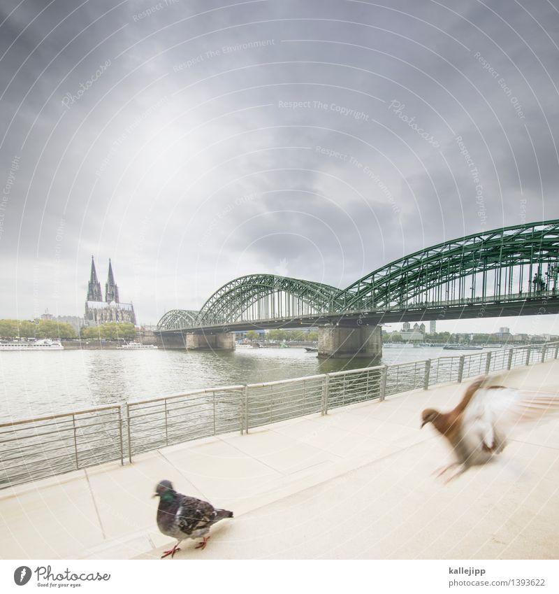 et kütt wie et kütt Stadt Haus Tier Architektur Gebäude fliegen Vogel Treppe Flügel Brücke Fluss Bauwerk Skyline Wahrzeichen Flussufer Stadtzentrum