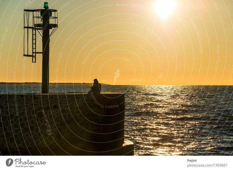 Sonnenuntergang an der Ostsee Freizeit & Hobby Ferien & Urlaub & Reisen Meer Flirten Sonnenaufgang Stimmung Glück Frühlingsgefühle Liebe Romantik Idylle