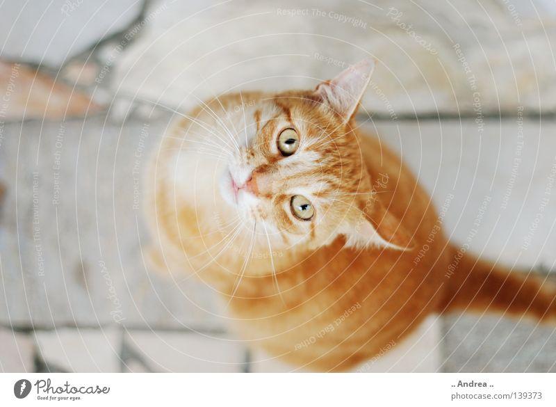 Red Tiger 12 Fell Katze Stein Traurigkeit Freundlichkeit grün rot Trauer Schnurrhaar Marmorboden Steinboden Säugetier tigi Hauskatze mietzi cat kitten