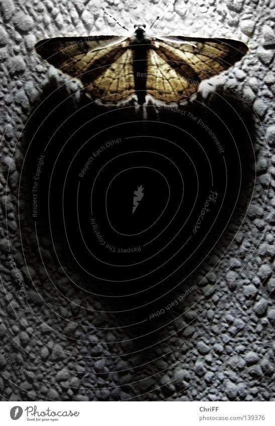 Herzmotte Motte Schmetterling Gefühle Symbole & Metaphern Schatten Kontrast Wand Muster herzlich Verliebtheit beachten herzförmig geherzt