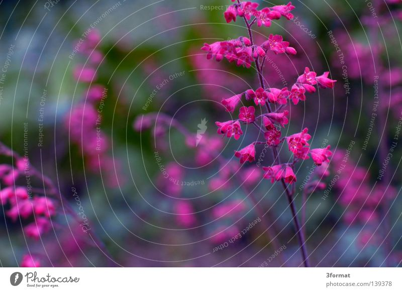 japanisch02 Frühling Frühlingsblume Symbole & Metaphern aufwachen Blume Blüte Blühend tauen Beginn Neuanfang positiv Park Wildnis Pflanze Japan sehr wenige