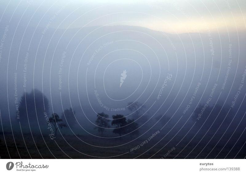 Kurz vor Sonnenaufgang... schön Baum Sommer Wiese Berge u. Gebirge Landschaft Nebel Horizont Sträucher fantastisch Weide Tau Tal GAU Rothaargebirge