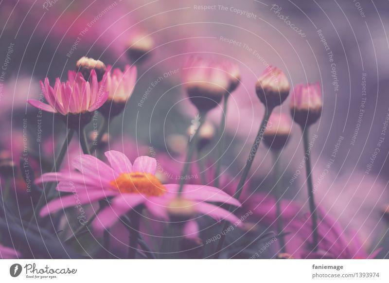 Blumenwiese Natur Pflanze Wiese sportlich schön rosa Blüte Farbe Blütenstiel Wiesenblume grün Schwache Tiefenschärfe zart rosarote Brille Stengel Farbfoto
