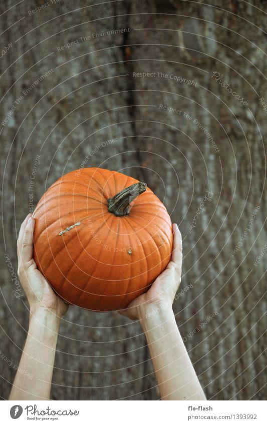 KÜR II Natur Freude Leben Herbst Gefühle Glück Kunst Lebensmittel orange Freizeit & Hobby Erde Ernährung Kreativität retro Gemüse Bioprodukte