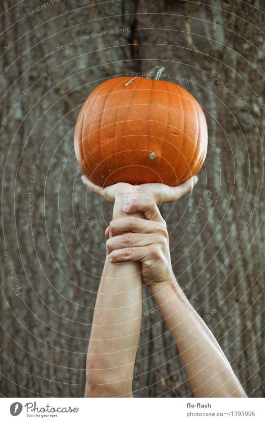 KÜR IIV Natur Leben Herbst Gesundheit Glück Garten Lifestyle Lebensmittel orange Ernährung rund Landwirtschaft Gemüse lecker Bioprodukte Vegetarische Ernährung