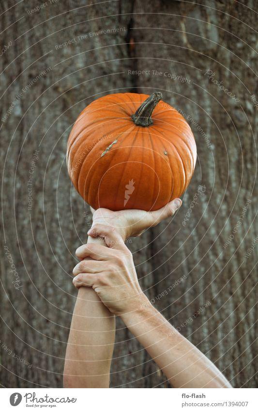 KÜR I nackt grün Herbst Gesundheit Kunst Lifestyle Lebensmittel braun orange Kraft ästhetisch Ernährung Kreativität kaufen bedrohlich Gemüse