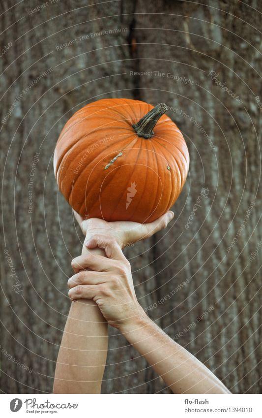 KÜR V Lebensmittel Gemüse Kürbis elegant Stil Feste & Feiern Erntedankfest Halloween Koch Herbst Pflanze Nutzpflanze festhalten tragen orange genießen