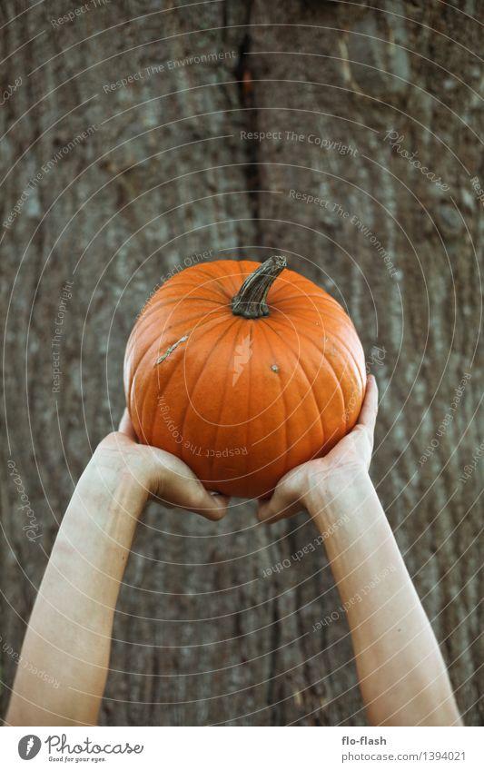 KÜR III Pflanze Herbst Gesundheit Kunst Feste & Feiern Lebensmittel orange rund Gemüse stark Bioprodukte Skulptur Vegetarische Ernährung tragen Halloween