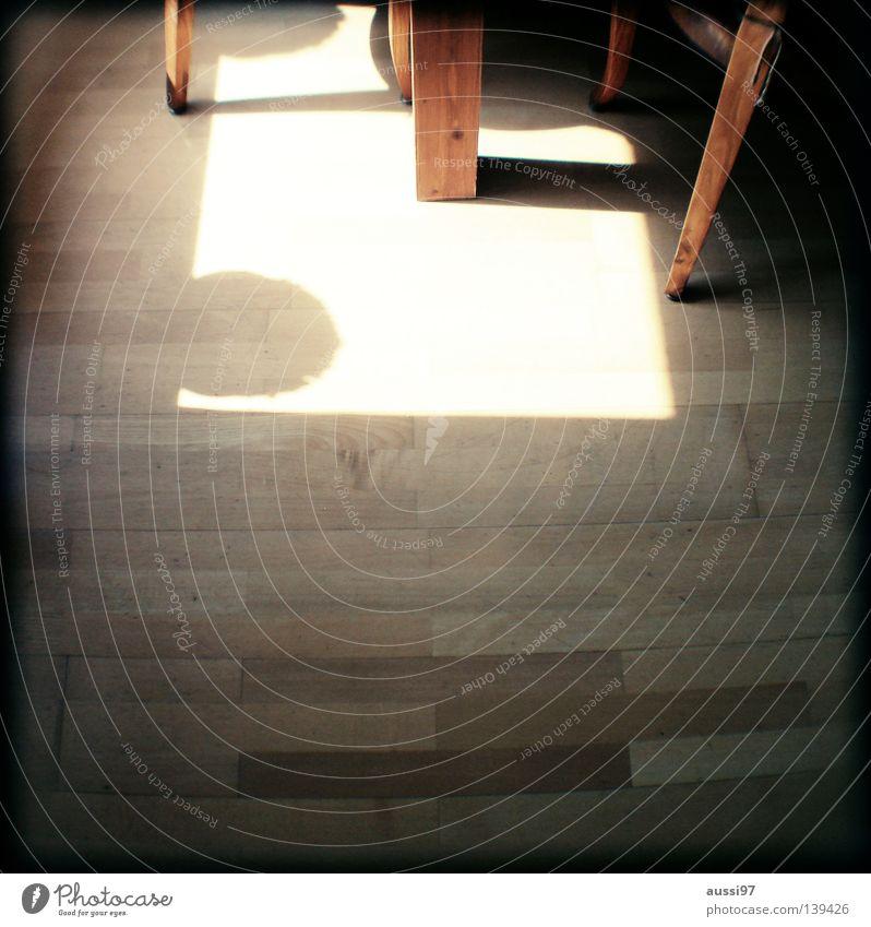 Beine schemenhaft Raster Muster analog Sucher Tiefenschärfe schlafen Vorhang hell Sonnenaufgang Tisch Parkett Flur Holzfußboden Laminat Gastronomie Küche
