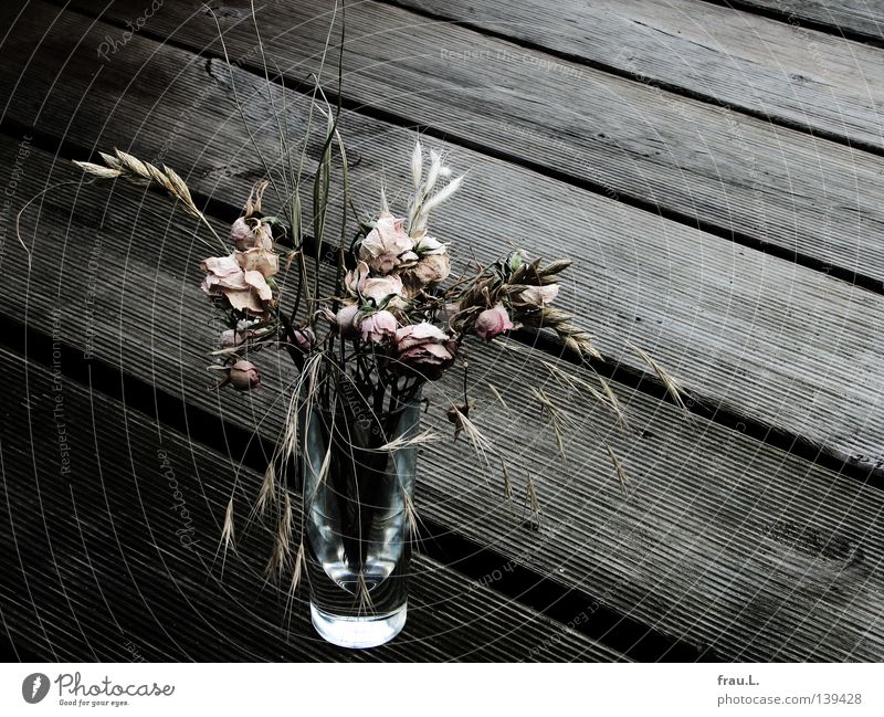 vertrocknet Tod Holz Gras Glas Dekoration & Verzierung Rose zart trocken Balkon getrocknet Grappa