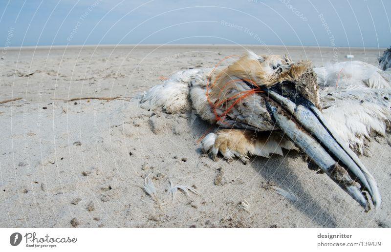 Ins Netz gegangen Wasser Ferien & Urlaub & Reisen Meer Sommer Strand Tier Umwelt Tod Küste Sand See Vogel dreckig Insel Seil Vergänglichkeit
