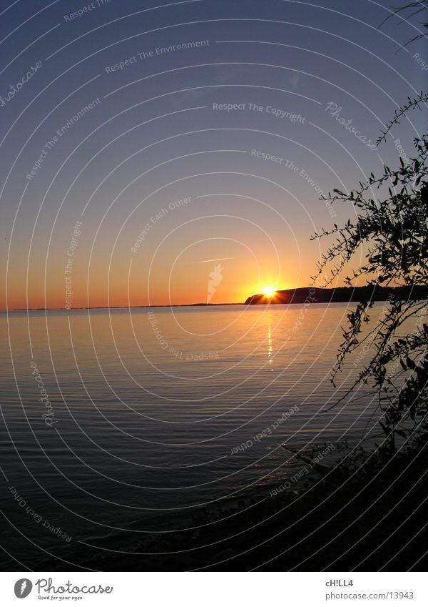 Rügener Sonnneuntergang Sonnenuntergang Baum Meer Wasser Ostsee Abend Reflexion & Spiegelung Himmel Zweig