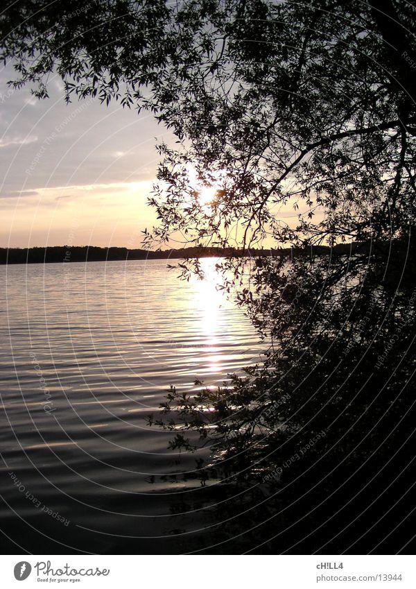 Sonnenuntergang an der Havel Wasser Baum Sonne Blatt Wellen Horizont Fluss Zweig Brandenburg Potsdam Havel Werder Havel