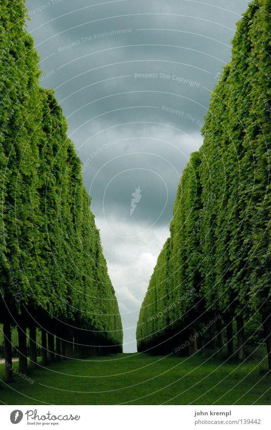 shining grün Hecke Sträucher Baum Fluchtpunkt Horizont Wolken schlechtes Wetter Paris Versailles Frankreich Geometrie Ordnungsliebe historisch Garten Park Ast
