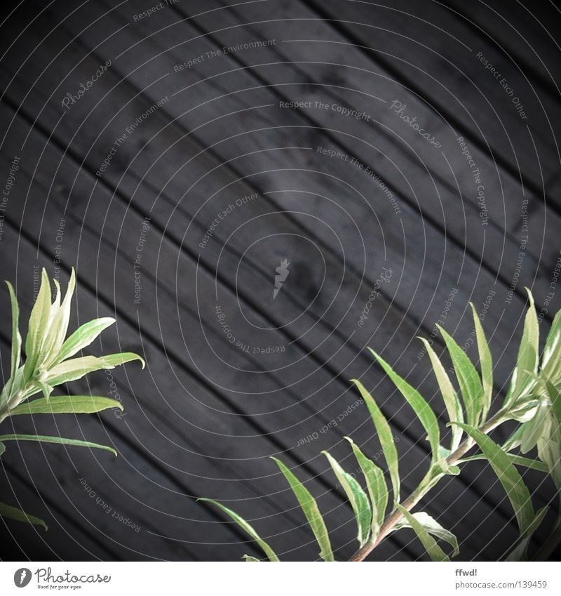 Zweigstelle Natur grün Pflanze Wand Holz Mauer braun Erfolg Wachstum Halm Holzbrett diagonal Grünpflanze