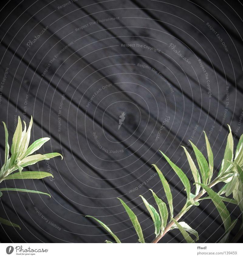 Zweigstelle Wand Mauer Holzwand Paneele braun Pflanze Halm grün Wachstum gedeihen Reifezeit diagonal Grünpflanze Erfolg Holzbrett Schiffsplanken Natur Kontrast