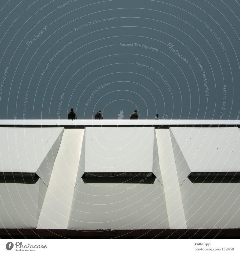 thomas d, hausmarke, andy y und smudo Haus Wand Taube Fassade Vogel Dach Flachdach Plattenbau Sommer Stadt Himmel kallejipp Architektur