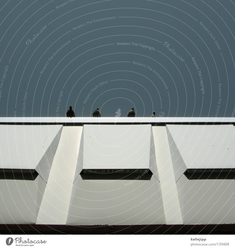 thomas d, hausmarke, andy y und smudo Himmel Stadt Sommer Haus Wand Vogel Fassade Dach Taube Plattenbau Flachdach