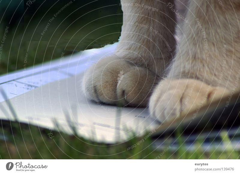 Katzenpfoten Pfote Hauskatze Wildkatze Waldwiese Fußweg Miau grün Natur Jagd Jäger Zufriedenheit Grüne Mauer rothaarig gestreift intensiv Landraubtier Raubkatze