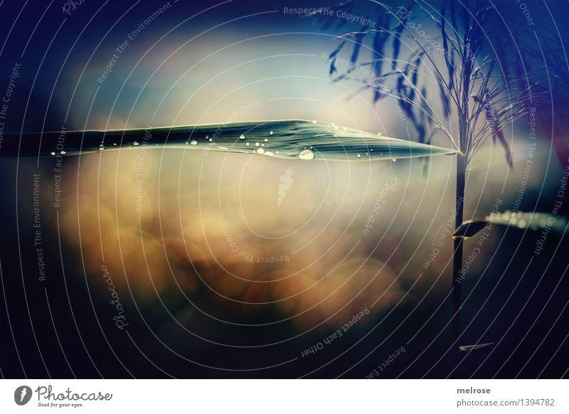 Allerseelen Stil Design Trauerfeier Beerdigung Natur Wassertropfen Herbst schlechtes Wetter Sträucher Farn Wildpflanze Gräser Gräserblüte Pflanzenteile Wald