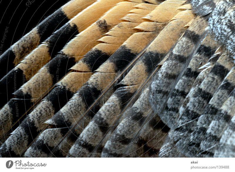 Turmfalke schön Himmel Tier Luft Angst Lebensmittel fliegen Feder Flügel Jagd Kontrolle Wachsamkeit Fressen Panik Vorsicht