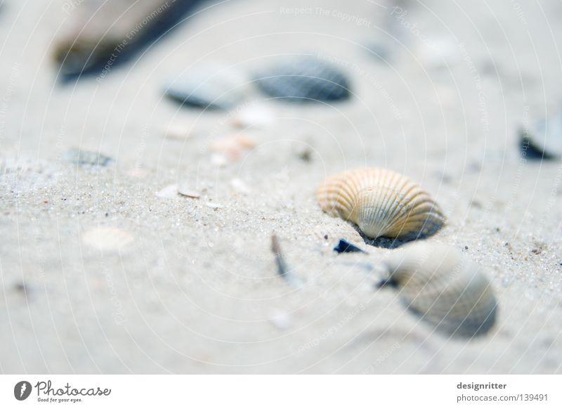 Liebe zum Detail Muschel Krabbe Meer See Strand finden Fundstück Strandgut Leben Sammlung Tier Meeresfrüchte Spielen Basteln erinnern Erinnerung