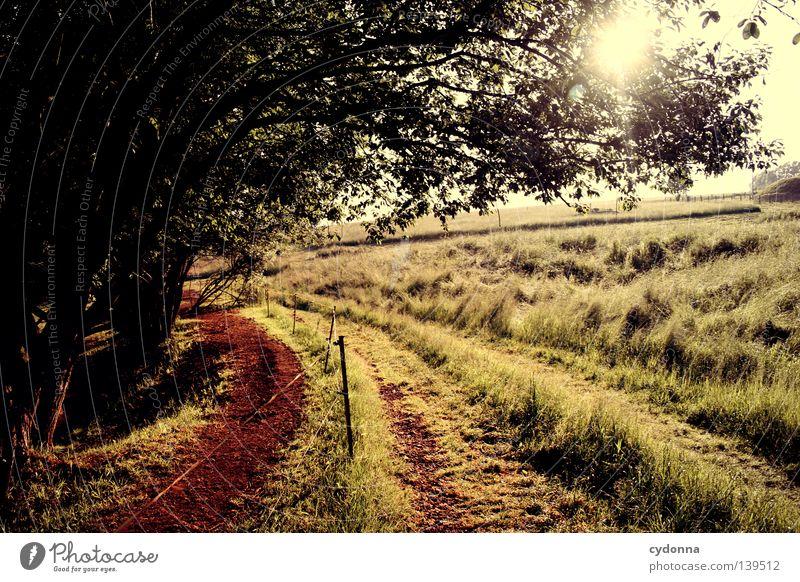 Sonnenuntergang Natur Himmel Baum grün Leben Wiese Wege & Pfade Wärme Landschaft Luft Pferd Spaziergang Idylle Landwirtschaft Grenze