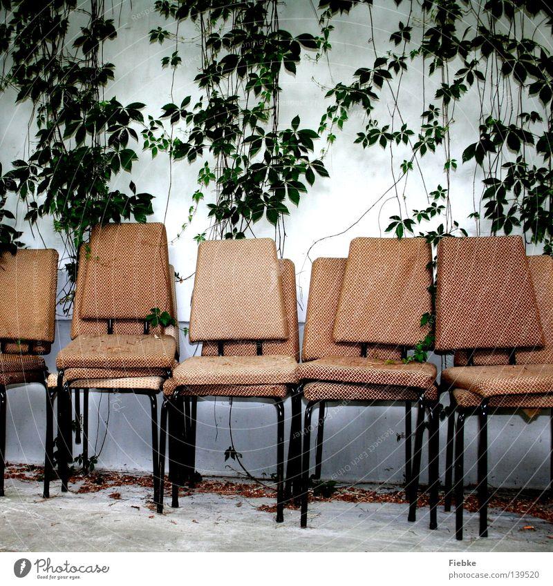 Logenplätze Stuhl Bühne Wand weiß alt Kletterpflanzen Pflanze Blatt grün Polster vergilbt ausgebleicht Tag Möbel Wein Wilder Wein beige Stapel Show Inszenierung