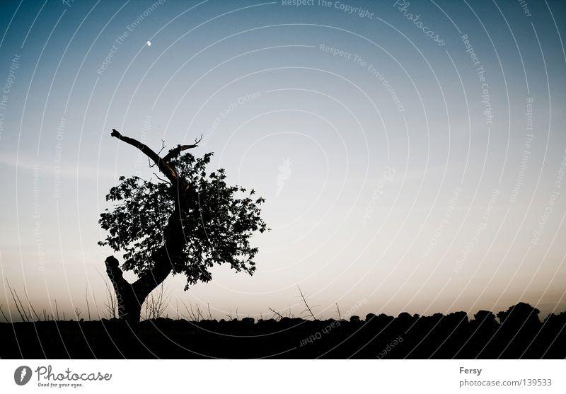 brandenburg Himmel Baum blau Sommer schwarz Wiese Mond