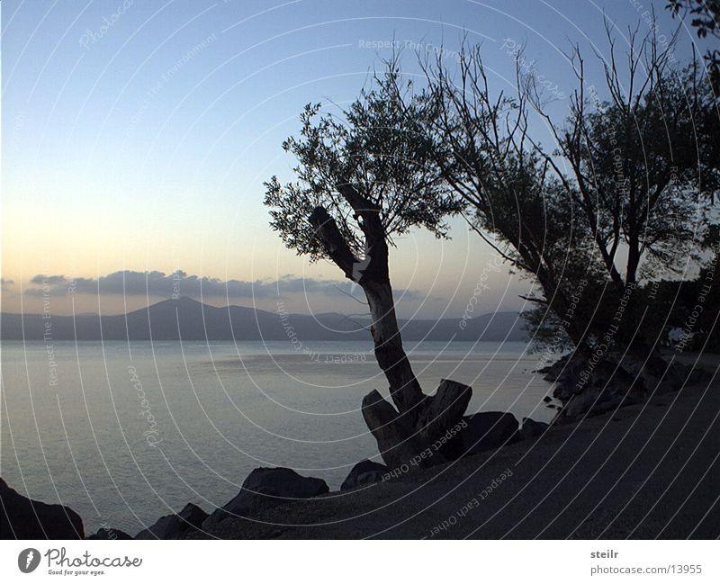 nächtliche Uferpromenade See Dämmerung Baum Felsen Böschung Menschenleer Außenaufnahme ruhig Hügel Wege & Pfade