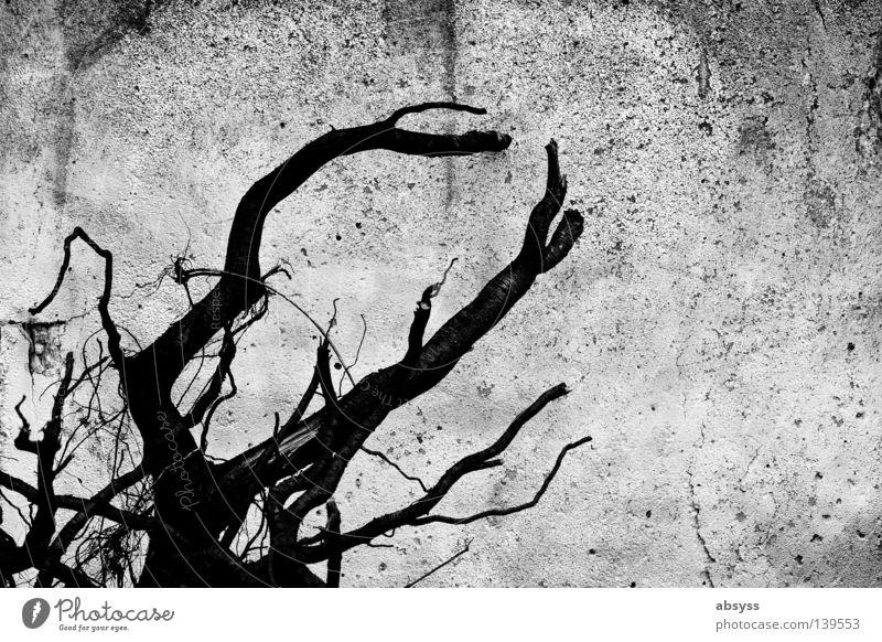 BLN08 | Stone Live Wand Beton weiß grau schwarz Holz trocken Sommer Steinwüste vergessen unfruchtbar porös Riss verfallen Ast Strukturen & Formen Wüste