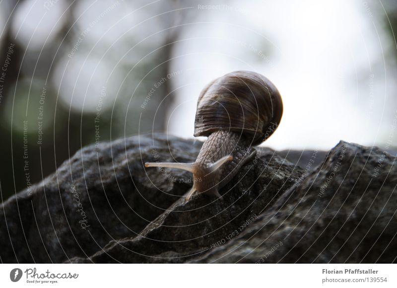 reise mit haus Schneckenhaus Haus Unschärfe langsam Zeitlupe Tier schleimig klein anstrengen tief Ecke Österreich Natur blind Gewicht Ferne steil Zoomeffekt