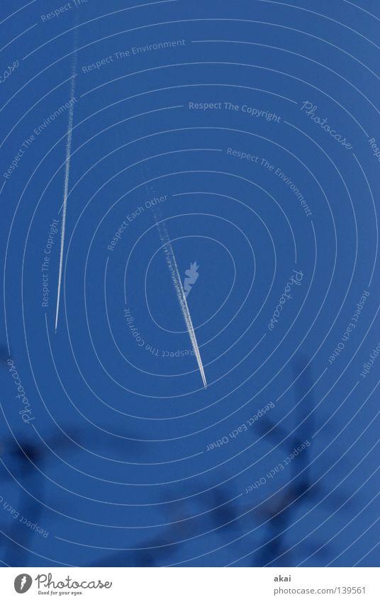 Getrennte Wege Himmel Baum blau Ferien & Urlaub & Reisen Wolken Flugzeug Aktion Luftverkehr Tourismus Flügel Vergänglichkeit Ast Streifen Rauch Veranstaltung