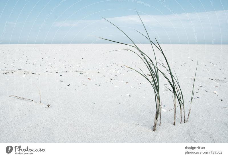 zarter Lebensretter Himmel Meer blau Pflanze Strand Ferien & Urlaub & Reisen ruhig Einsamkeit Ferne kalt Erholung Freiheit See Zufriedenheit braun Erde
