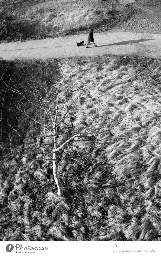 spaziergang Mensch Hund Natur Mann Baum Landschaft Tier Winter kalt Erwachsene Umwelt Leben Herbst Bewegung Wege & Pfade Gesundheit