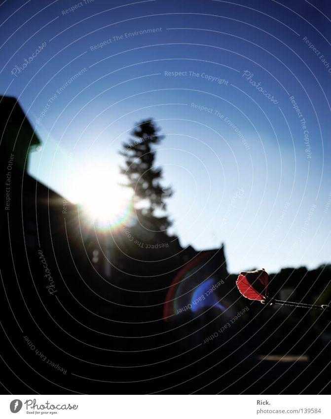 .Blendenstern grell blenden Lichtfleck Sonne Sonnenstrahlen schwarz Kontrast rot Blattgrün Himmel blau Wolken Freundlichkeit Baum Tanne Teer Trauer Haus Gebäude