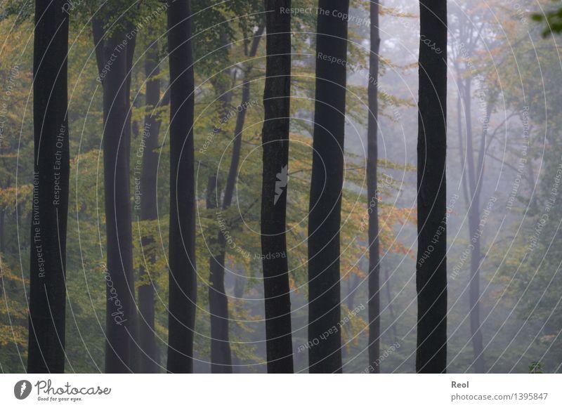 Nebelwald Natur Pflanze grün Baum Landschaft ruhig dunkel Wald kalt Herbst wild Luft Wachstum Ordnung Idylle