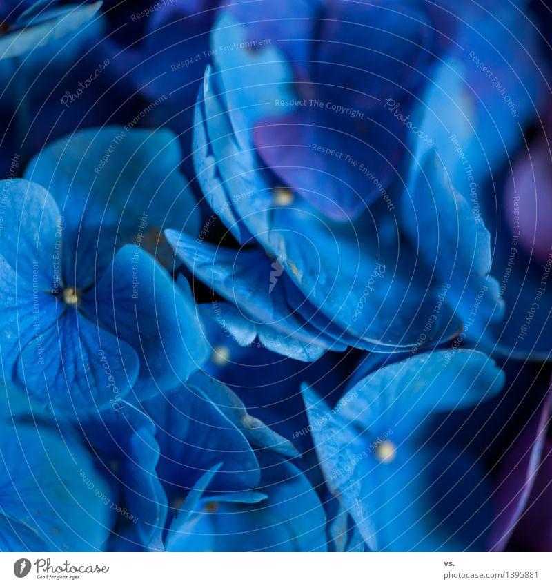 Ja ja so blau blau blau.... Natur Pflanze blau schön Blume Blüte Stil Garten Raum Häusliches Leben frisch Dekoration & Verzierung Romantik Blumenstrauß Duft Wohnzimmer