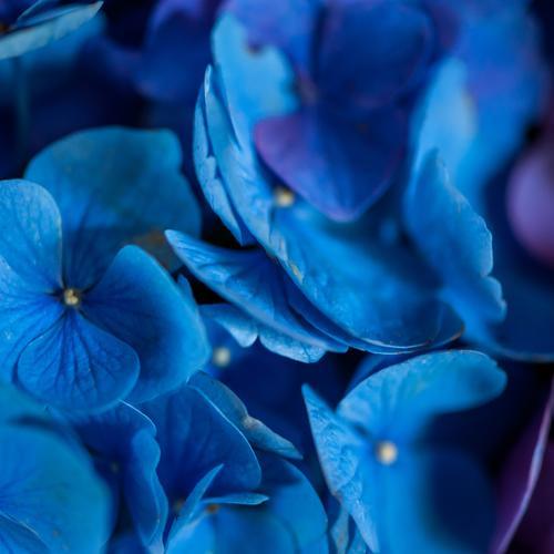 Ja ja so blau blau blau.... Natur Pflanze schön Blume Blüte Stil Garten Raum Häusliches Leben frisch Dekoration & Verzierung Romantik Blumenstrauß Duft